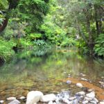 Image of the swimming hole in the Waiatekatanga River