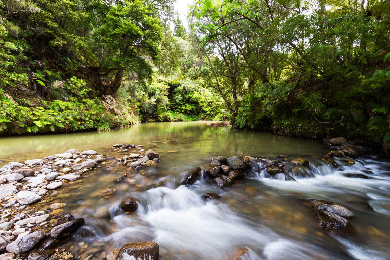 swim in the rainforest river of the Wairua Lodge on coromandel