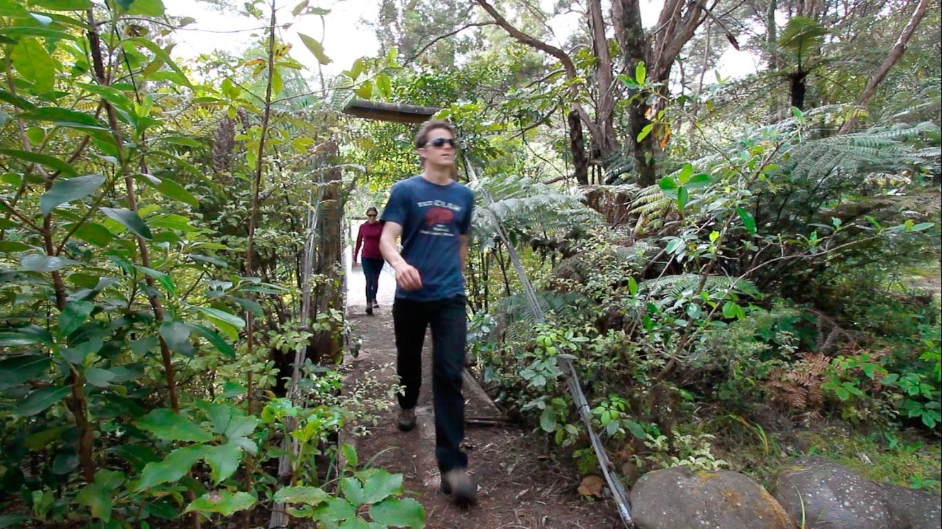 Regenwald Entdeckerpfade