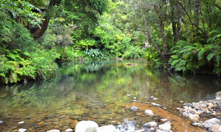 Image of the swimming hole in the Waiatekatanga River