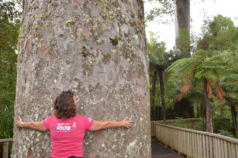 Kauri-Grove Experience