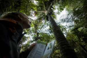 Get to know the locals - Nikau Palm