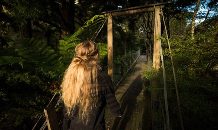 Wairua Lodge - Discover our Rainforest Trails