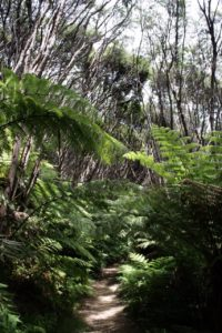 Coastal Walkway - A beautiful hike at the north tip of Coromandel Peninsula