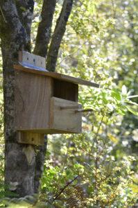 Birdhouse for silvereye birds at Wairua Lodge