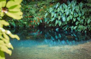 Wonderful Jungle Riverbed at Wairua Lodge, Whitianga, NZ